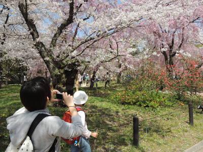 お弁当持って京都お花見散歩_b0252363_1752168.jpg