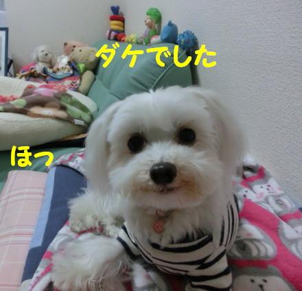 b0193480_1539737.jpg