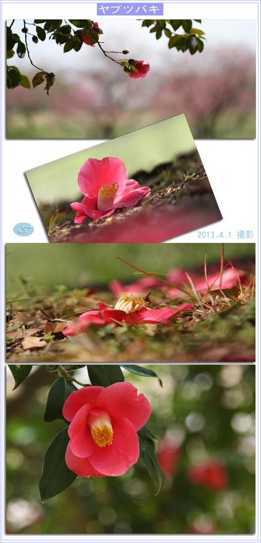 f0164592_825410.jpg