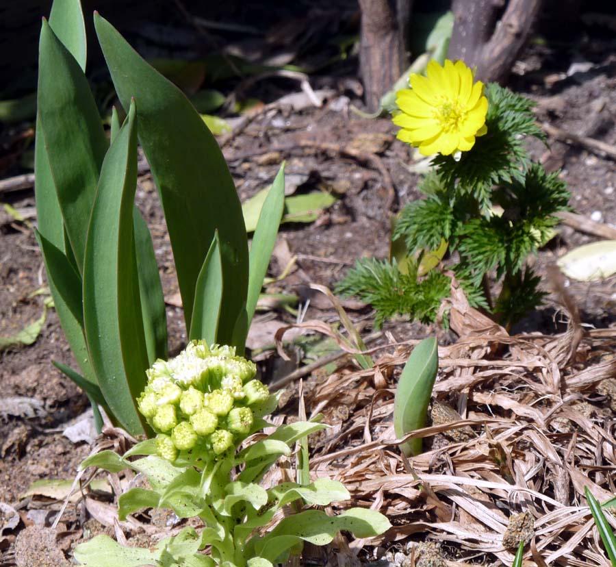 春の花_f0150893_18185270.jpg