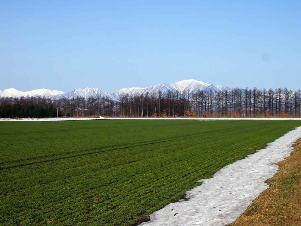 4月、雪どけ進む・・中札内村の農村風景_f0276498_11594100.jpg