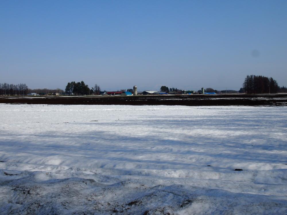 4月、雪どけ進む・・中札内村の農村風景_f0276498_1245144.jpg