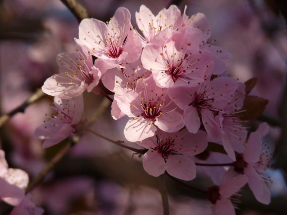 Springtime is here!_a0164603_17423845.jpg
