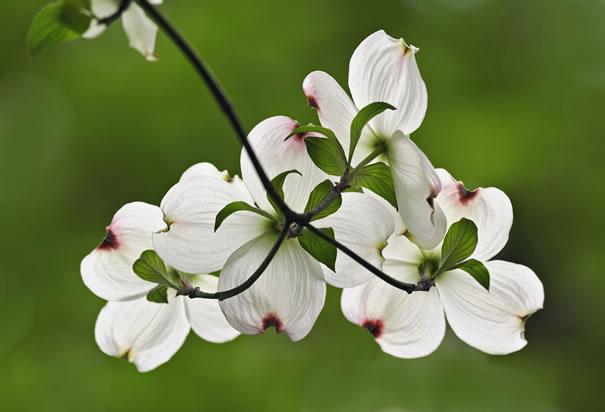 Springtime is here!_a0164603_174369.jpg