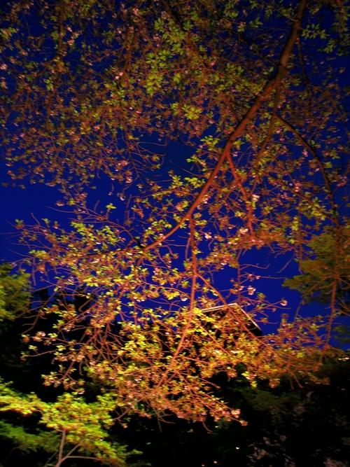 春ボジョレーと夜桜ビュッフェ@八芳園_e0123104_6505069.jpg