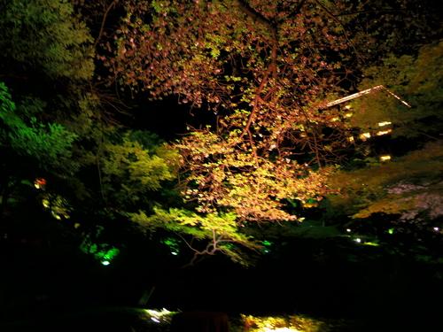 春ボジョレーと夜桜ビュッフェ@八芳園_e0123104_744899.jpg