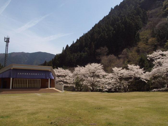 湯来ロッジ周辺の桜など_c0116915_012429.jpg