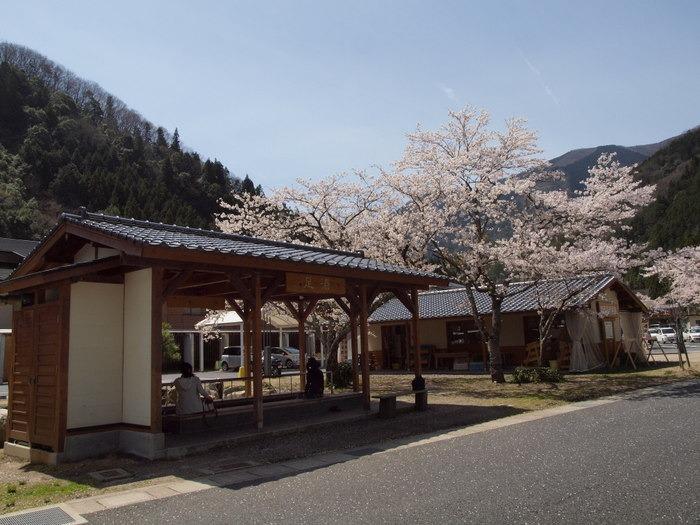 湯来ロッジ周辺の桜など_c0116915_015712.jpg