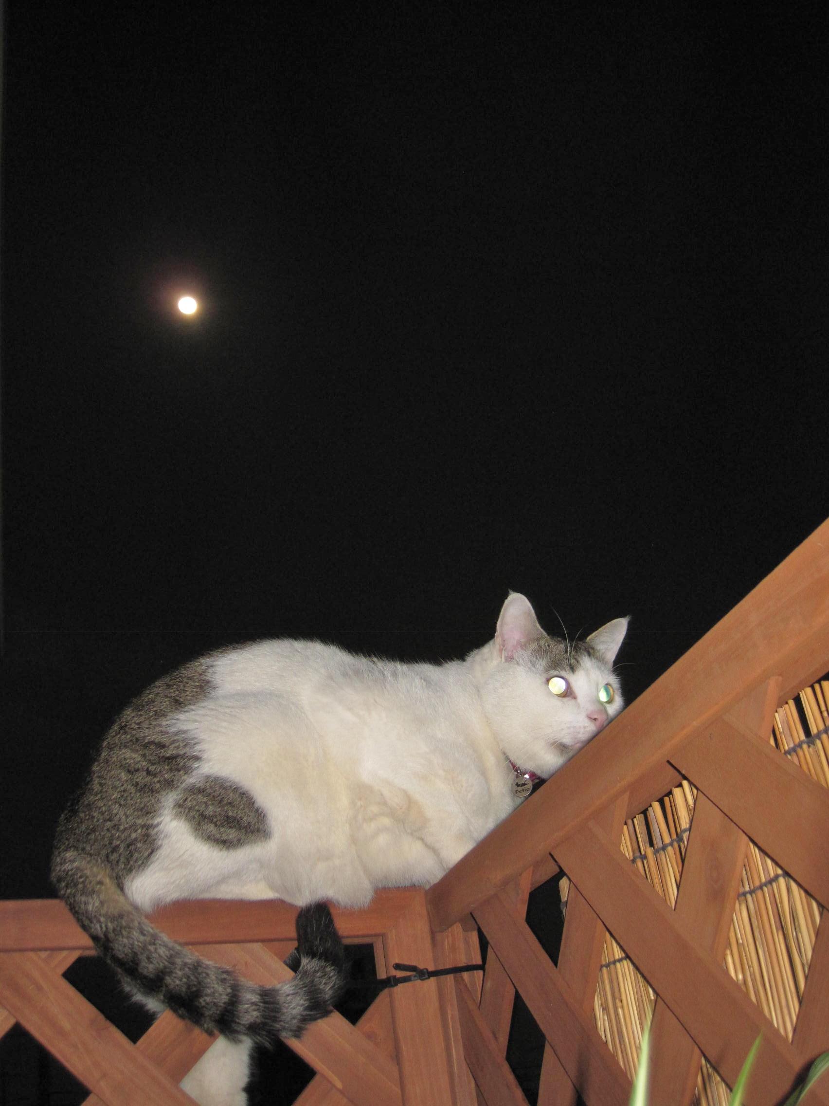 ~Moon in CAT\'S♥EYE_b0203919_22473281.jpg