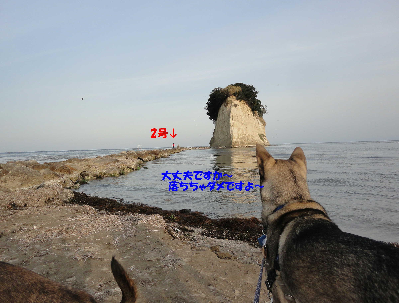 遼とわらびの能登一周☆どんぐりも一緒_b0207320_10582627.jpg