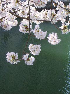 すずめと桜_e0127625_18572384.jpg