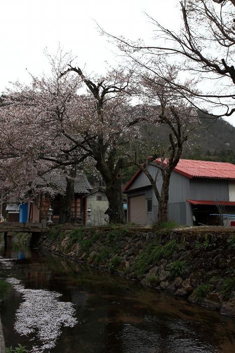 2013 桜 (竹田城跡・速報)_a0294534_19535527.jpg