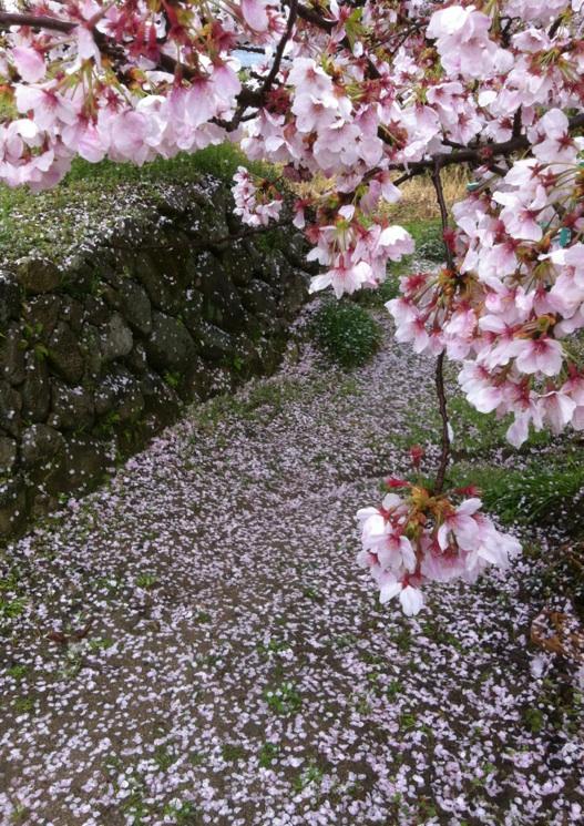 桜の香り_b0072234_23272026.jpg