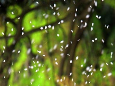海に落ちる滝が見える季節はずれの二人きりのビア・ガーデン_c0109850_1115481.jpg