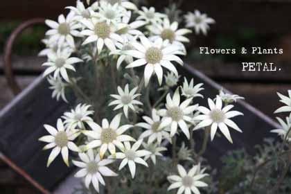 明日の花たち_a0123451_16154934.jpg