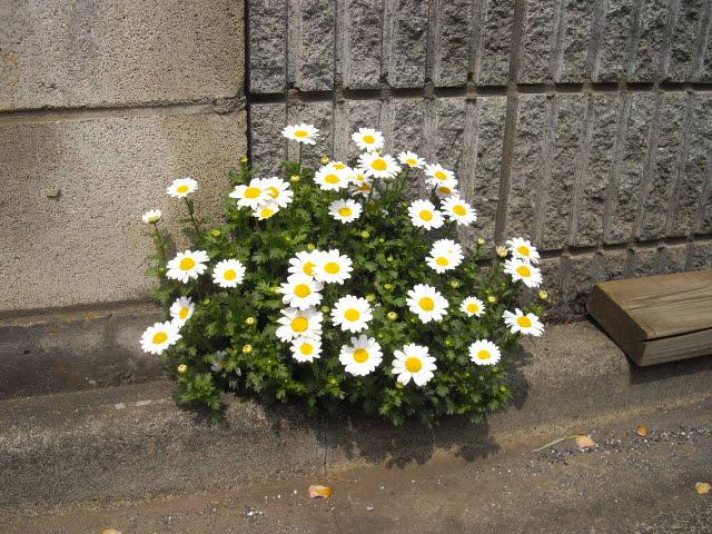 これって根性花ですよ~_d0116059_2224162.jpg