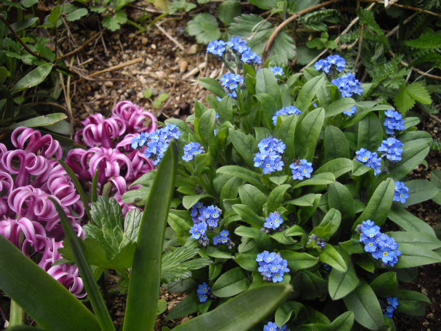 これって根性花ですよ~_d0116059_2282668.jpg