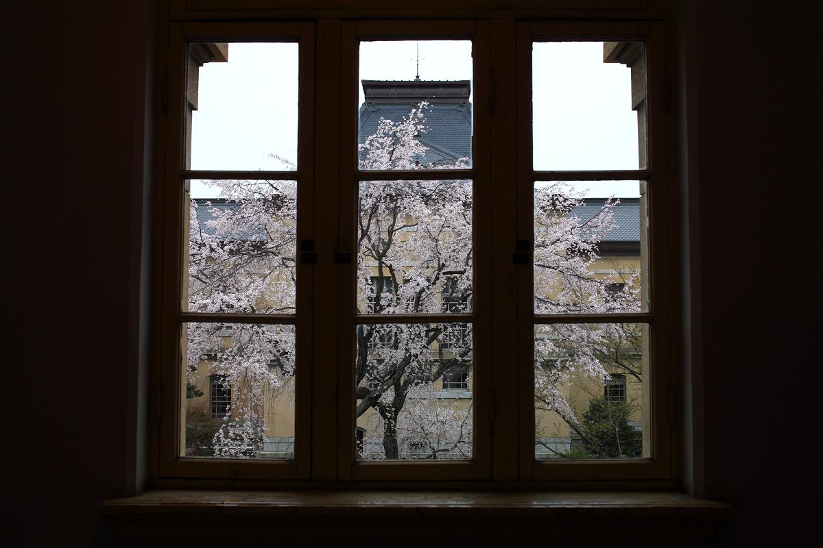桜 2013 <京都 京都府庁> _f0021869_23441690.jpg
