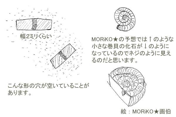 三葉虫化石(モロッコ産)_d0303974_19261770.jpg