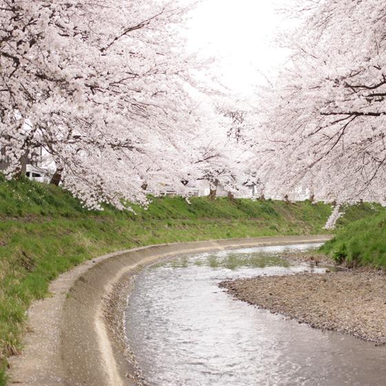 桜をふんわり撮る!カメラ女子会をしました_a0189805_20394718.jpg