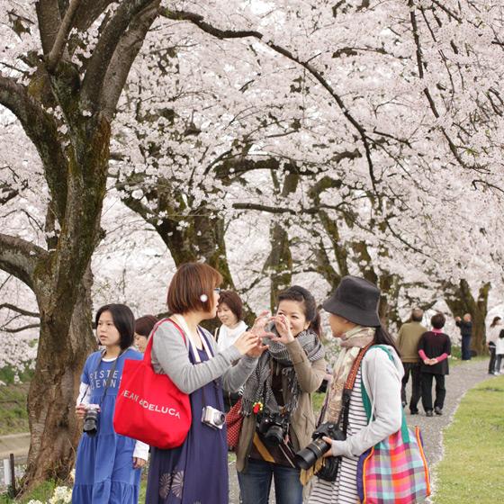 桜をふんわり撮る!カメラ女子会をしました_a0189805_20401091.jpg