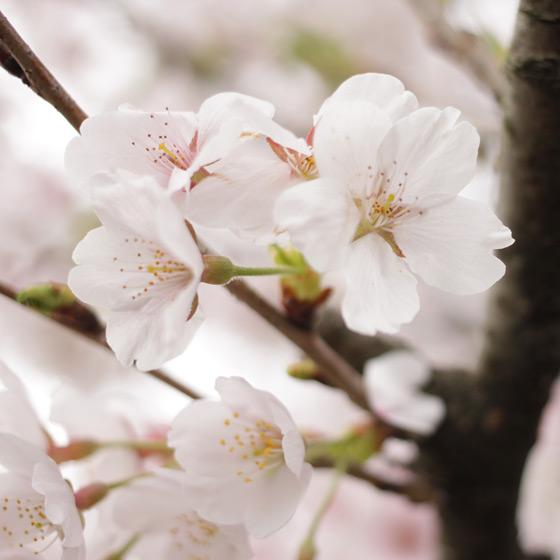 桜をふんわり撮る!カメラ女子会をしました_a0189805_2040295.jpg