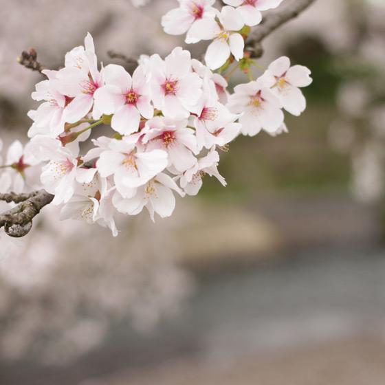 桜をふんわり撮る!カメラ女子会をしました_a0189805_20405526.jpg