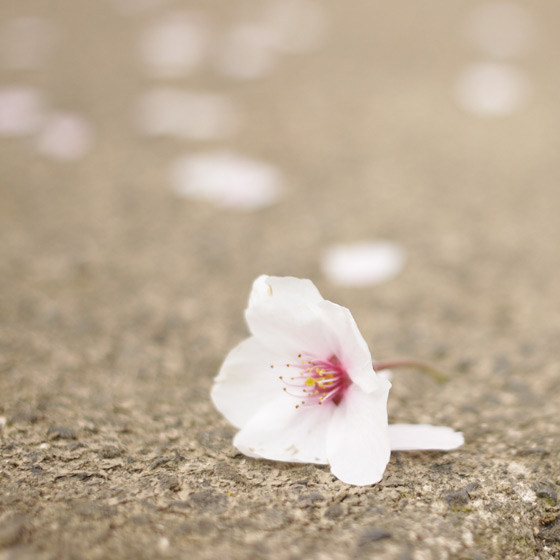 桜をふんわり撮る!カメラ女子会をしました_a0189805_2041881.jpg