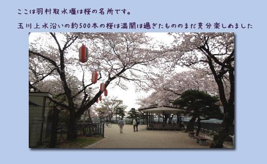 玉川上水ウォーキング (1回目)_c0051105_16293427.jpg