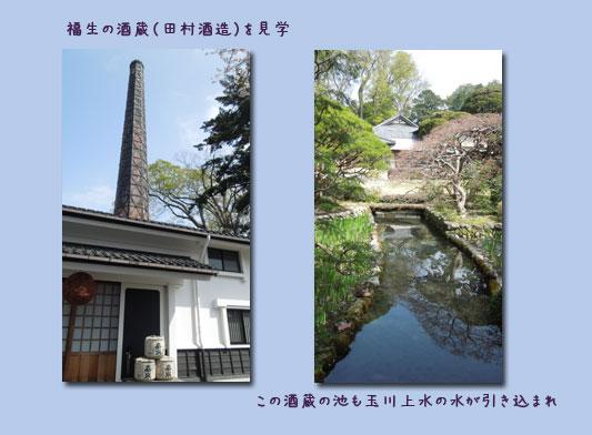 玉川上水ウォーキング (1回目)_c0051105_16413466.jpg