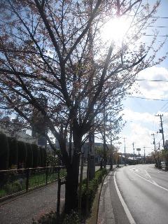 「葉桜」は夏の季語!_d0091909_8542292.jpg