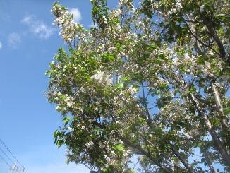 「葉桜」は夏の季語!_d0091909_90935.jpg