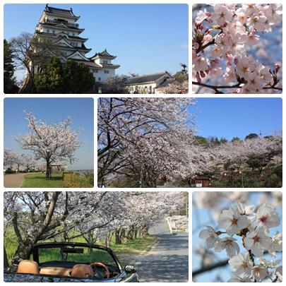今年も福山に桜の季節がやってきました!_f0167415_14431190.jpg