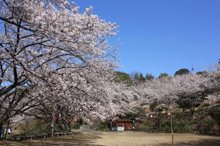 今年も福山に桜の季節がやってきました!_f0167415_14434072.jpg