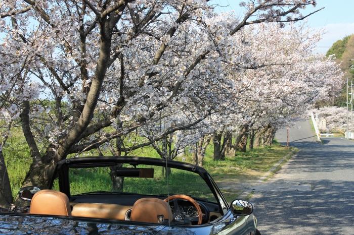 今年も福山に桜の季節がやってきました!_f0167415_14441739.jpg