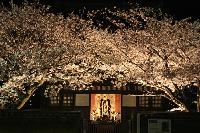 今年も福山に桜の季節がやってきました!_f0167415_14444693.jpg