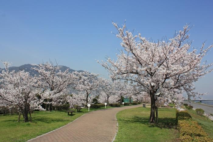 今年も福山に桜の季節がやってきました!_f0167415_14554960.jpg