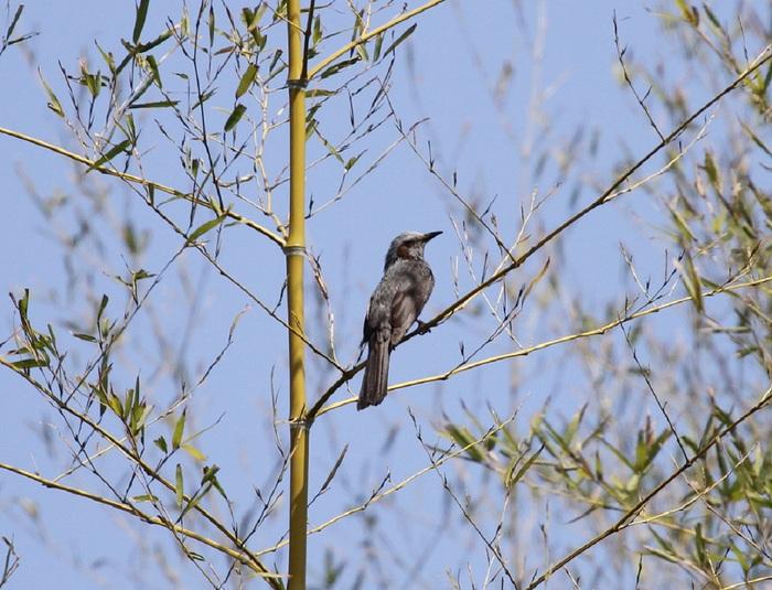 MFを鳥撮り散歩_f0239515_1912071.jpg
