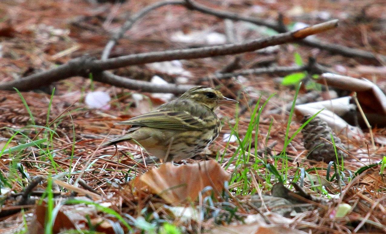 MFを鳥撮り散歩_f0239515_19162985.jpg