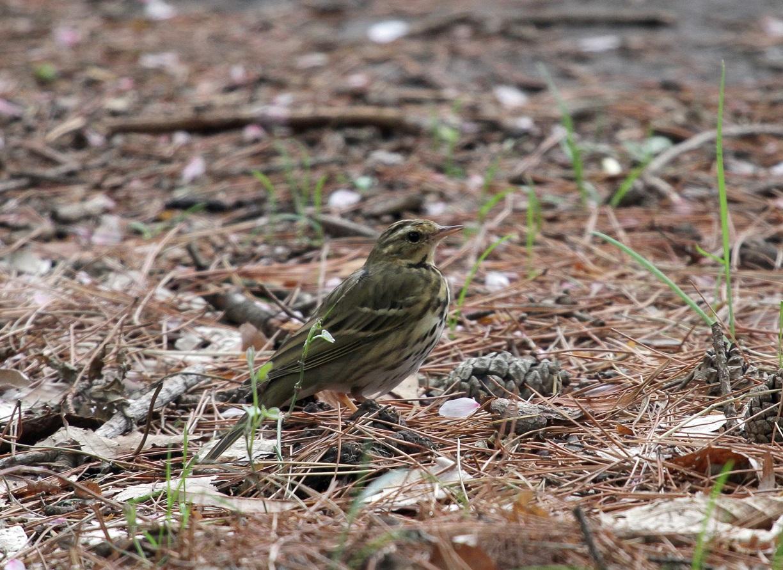 MFを鳥撮り散歩_f0239515_19194457.jpg