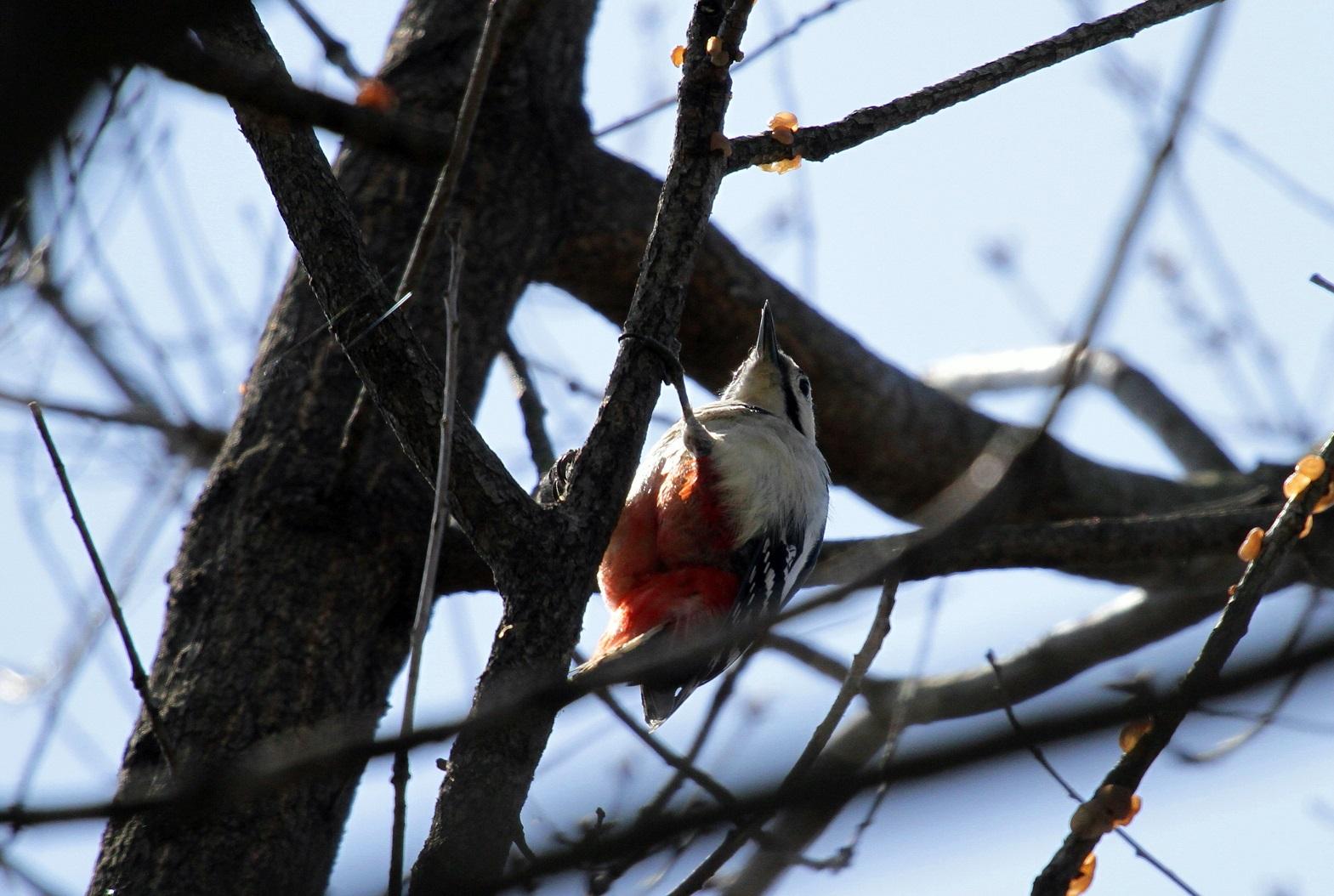 MFを鳥撮り散歩_f0239515_1971670.jpg