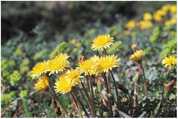 ど田舎も「春」でぇす(^-^)/_c0042324_14124487.jpg