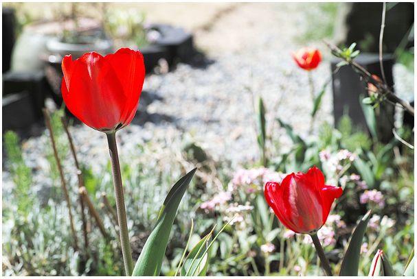 ど田舎も「春」でぇす(^-^)/_c0042324_1485660.jpg