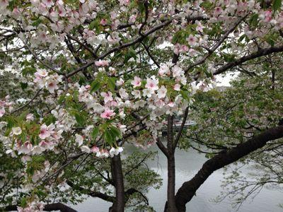 春の嵐の前に…_c0190424_19311480.jpg