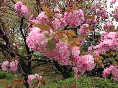 春の嵐の前に…_c0190424_19313646.jpg
