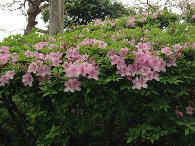 春の嵐の前に…_c0190424_19313814.jpg
