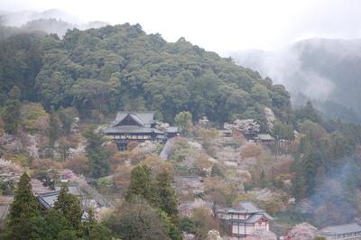 滝蔵権現桜、東吉野の宝蔵寺の枝垂れ桜_a0237937_19555799.jpg
