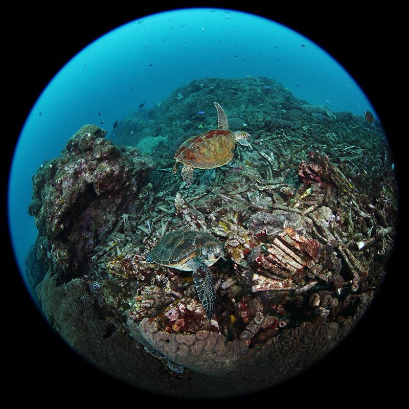海の見える水晶玉その2_b0186442_1953866.jpg
