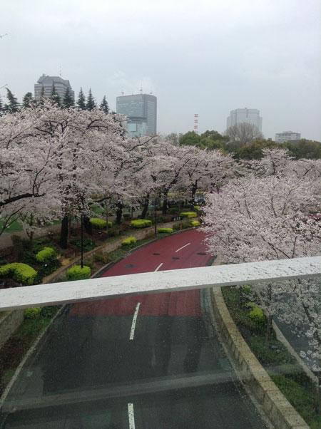 TOKYO 春旅 2日目 次は~渋谷_a0262845_1641305.jpg