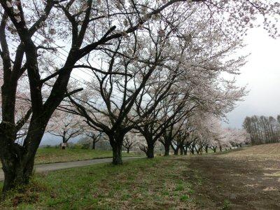 新府の桃は満開♪_f0019247_16592075.jpg